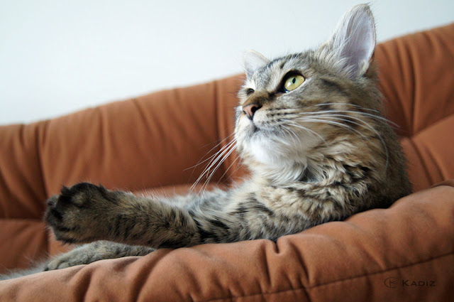 красавица на диване
