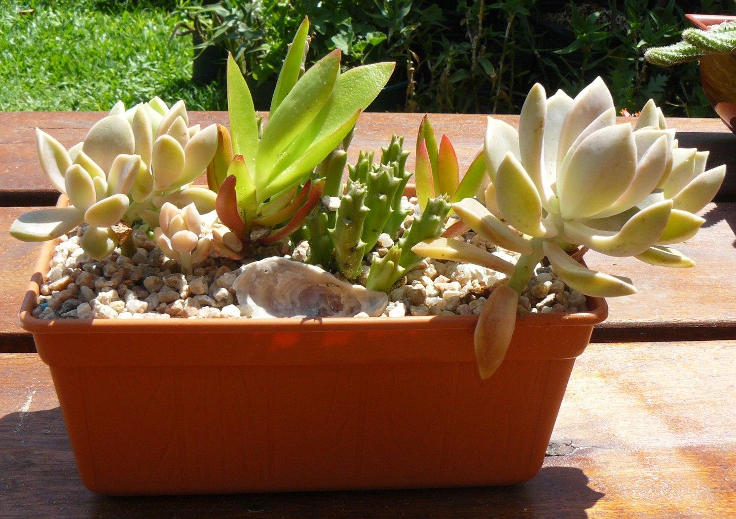 Jardines de cactus y suculentas tiffany cactus y for Jardines con cactus