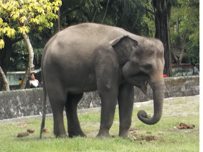 foto gajah di kebun binatang gembiraloka 02