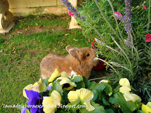 En Primavera en el jardín