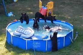 Bears just wanna have FUN!!