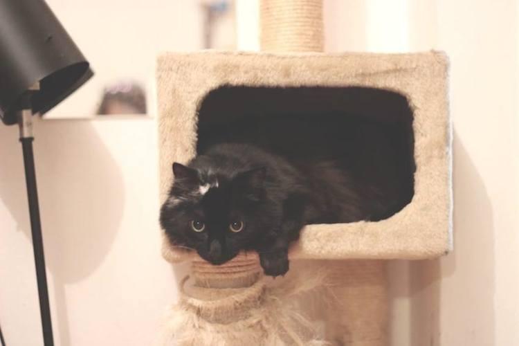 Das patas cabe a esconderijos para gatos na doen a - Trepadores para gatos ...