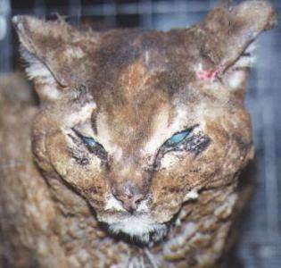 animal cruelty, Illinois, Rep. Maria Antonia Berrios, sex offenders, registry, torture, shelter, zoo, pet, cat, dog