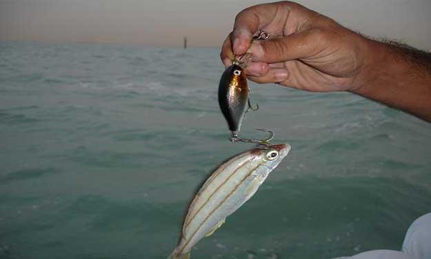 سمكة تقتل صيادها