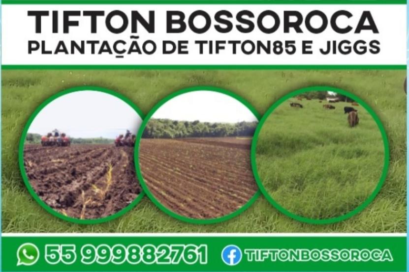 Plantação de Tifton 85 e Jiggs