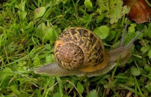 Garden Pests: How to Combat Slugs and Snails