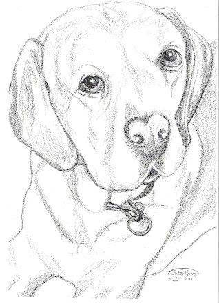 Labrador dog pic