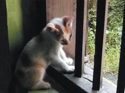 Foto-Foto Anak Kucing Lucu di Luar Jendela Kamar Kost Gue 07