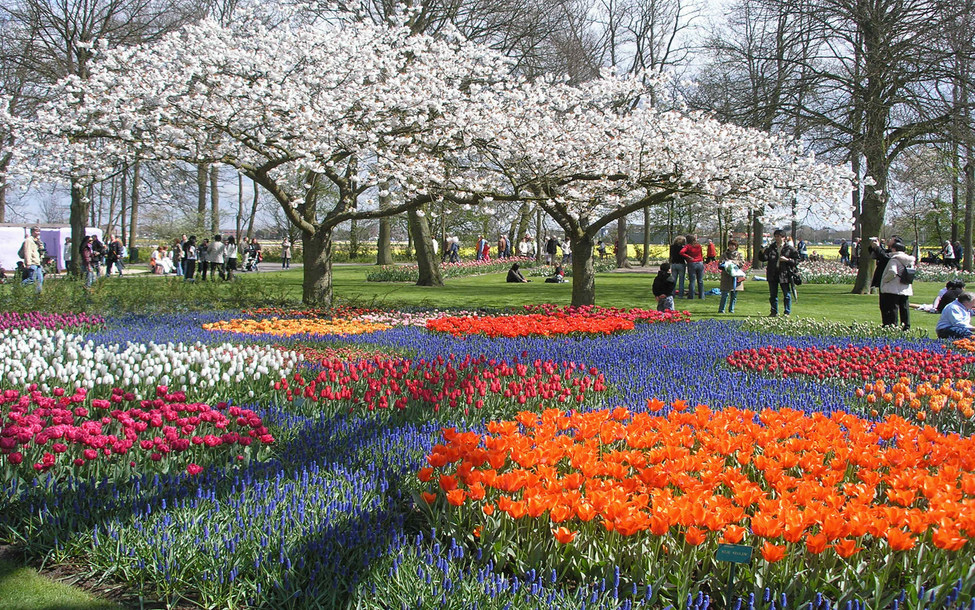 Make Your Life Colorful In The Finest Tulip Garden In The