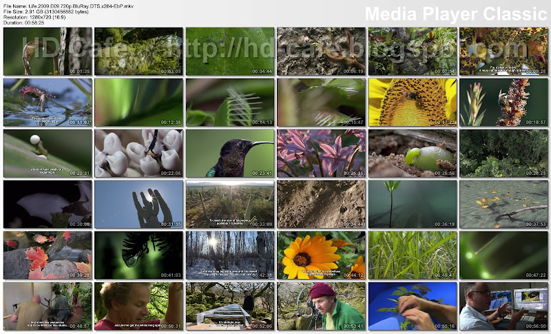 Life 2009 Episode 09 - Plants video thumbnails