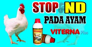 http://admin-naturalnusantara.blogspot.com/2014/02/viterna-mencegah-gangguan-pernafasan.html