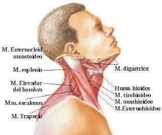 La hernia sobre la columna vertebral el tratamiento después de la operación