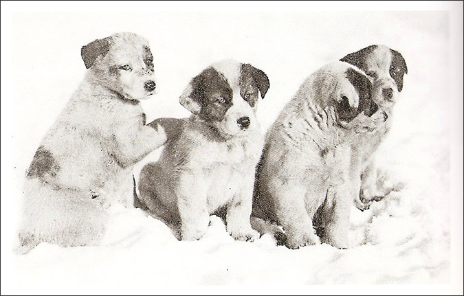 Notes from the Pack - a dog blog. Brave sled dogs on Shackleton's Antarctic expedition.