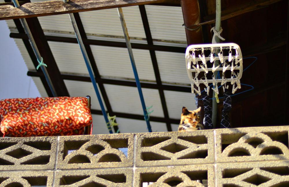 二階にいたひなたぼっこ猫の写真