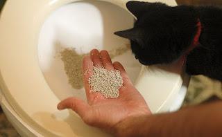 gato siendo recompensado