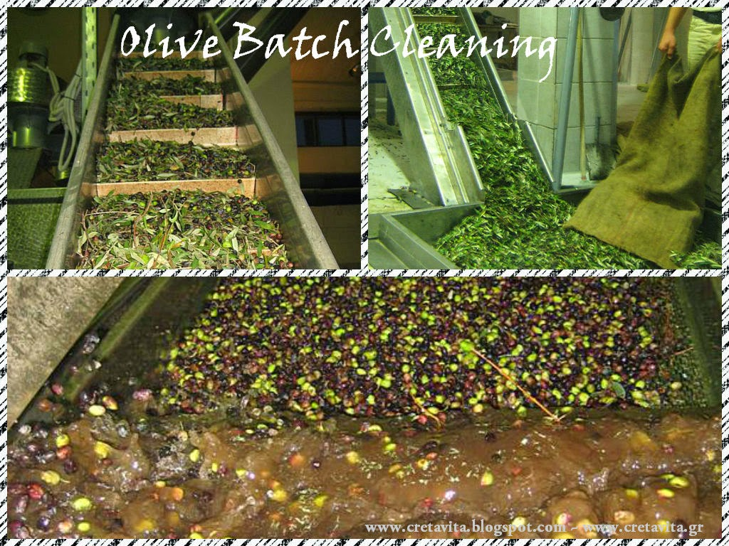 Olive Batch Cleaning