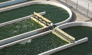 Algal fuel growing in open ponds