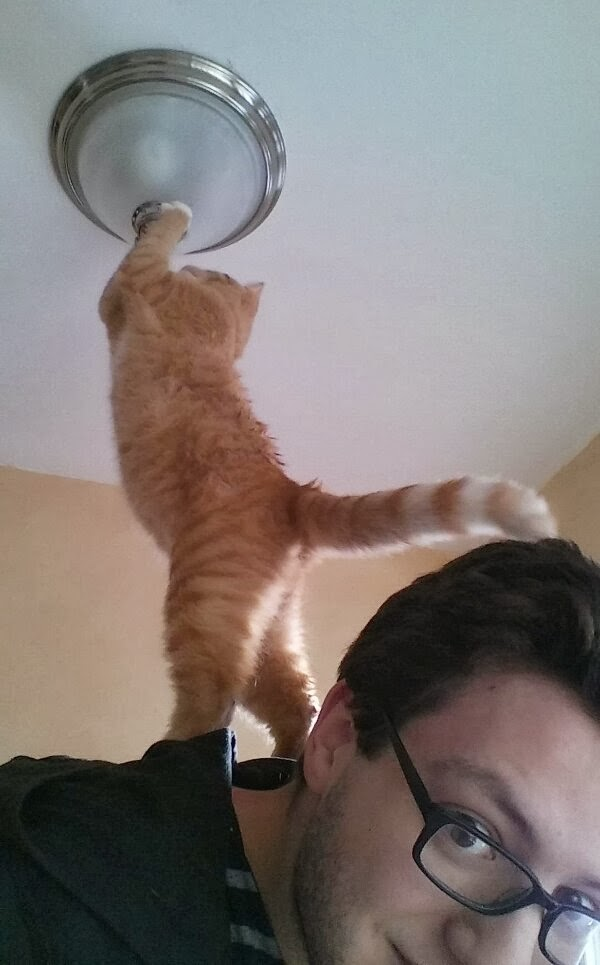 Funny cats - part 86 (40 pics + 10 gifs), cat fixing lamp