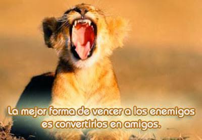 lindo leon