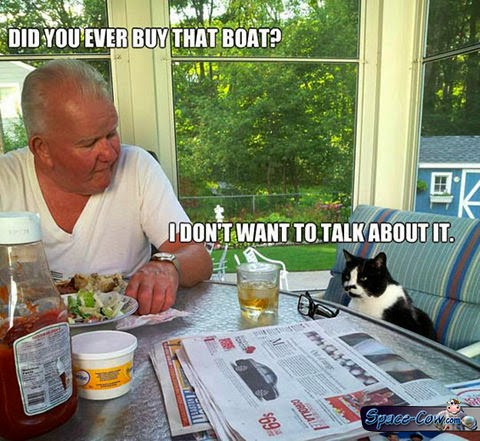 funny cat boat picture