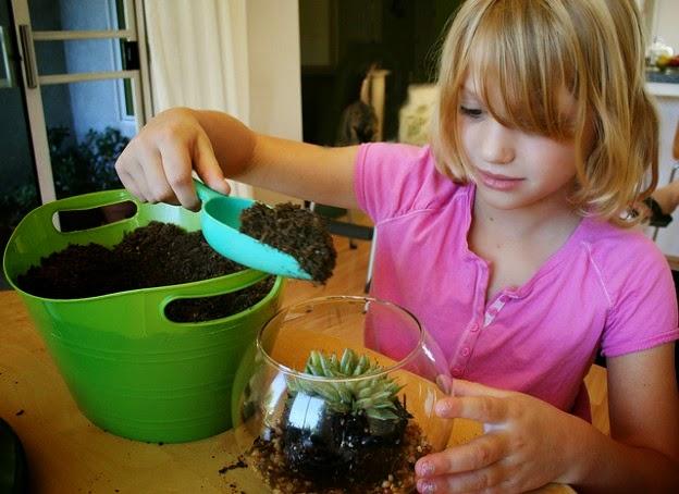 2- زراعة النباتات