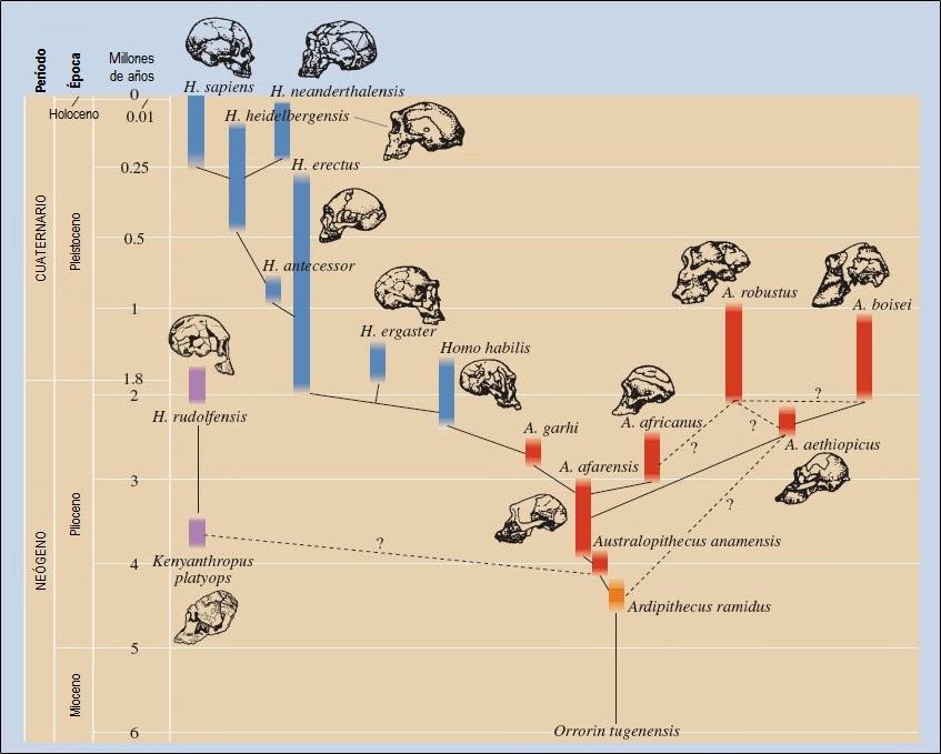 Palaeos, la historia de la Vida en la Tierra: enero 2014