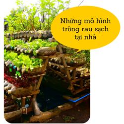 https://sites.google.com/site/tuvantrongrausach/nhung-mo-hinh-trong-rau-sach-tai-nha