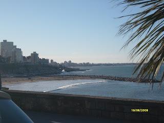 Mar del Plata - Palmera y mar