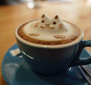 gato arte cafe curioso