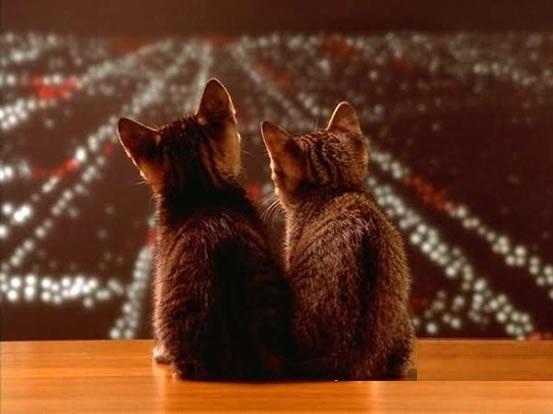El romance de los gatos (Felicia y Coco 1 de 2)