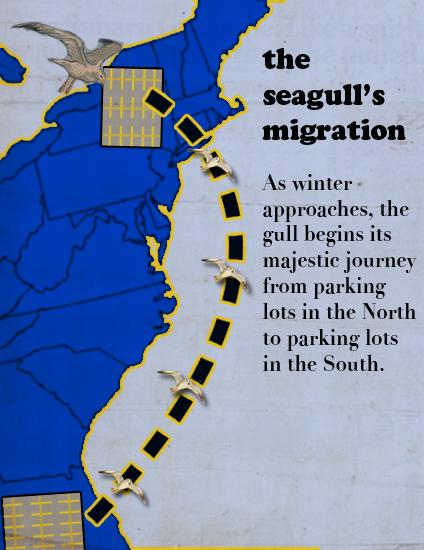 progressive charlestown  seagull migration