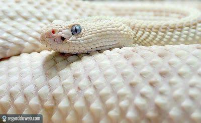 Images amusantes et incroyables Animal - Serpent v23