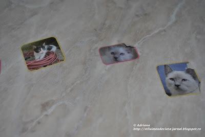 lipim autocolante cu pisici