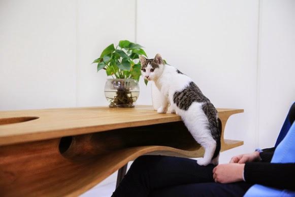 Mesa de gatos – Bem Legaus
