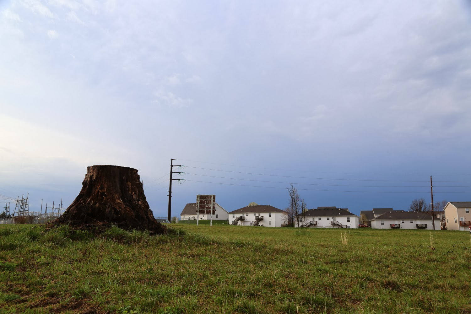 STUMPED:  Tree preservation vs. land excavation in growing Columbia
