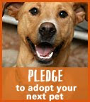Pledge to Adopt
