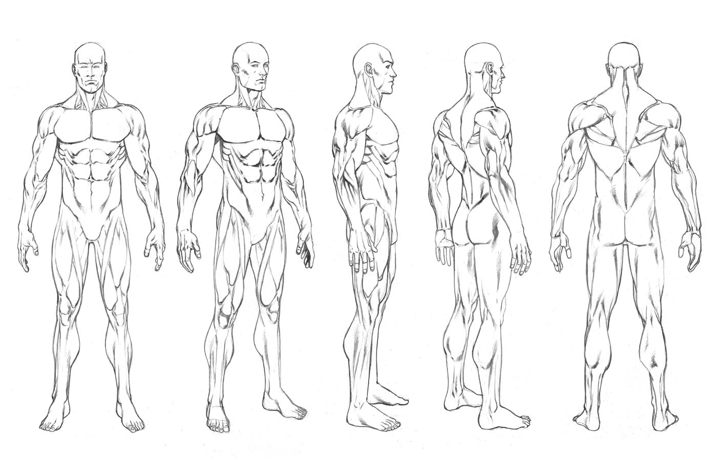 Comic Book Character Design Template : Robert atkins art character turnarounds and figure