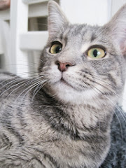 Katten Myra