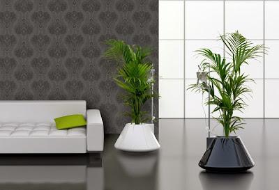 decora tu hogar con plantas y flores