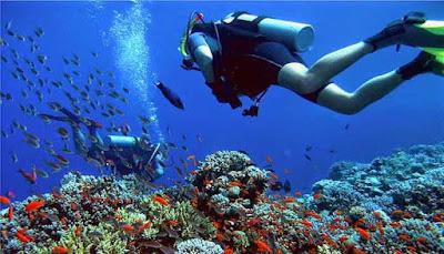 Diving Di Pulau Menjangan