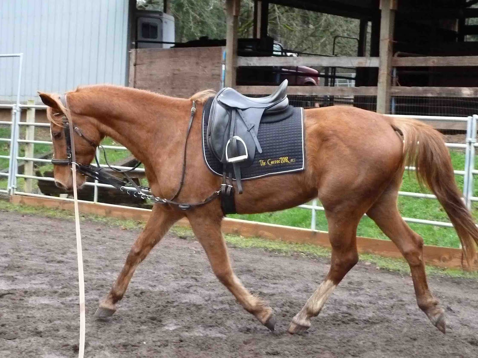 Muscle Build Up Feed For Horses