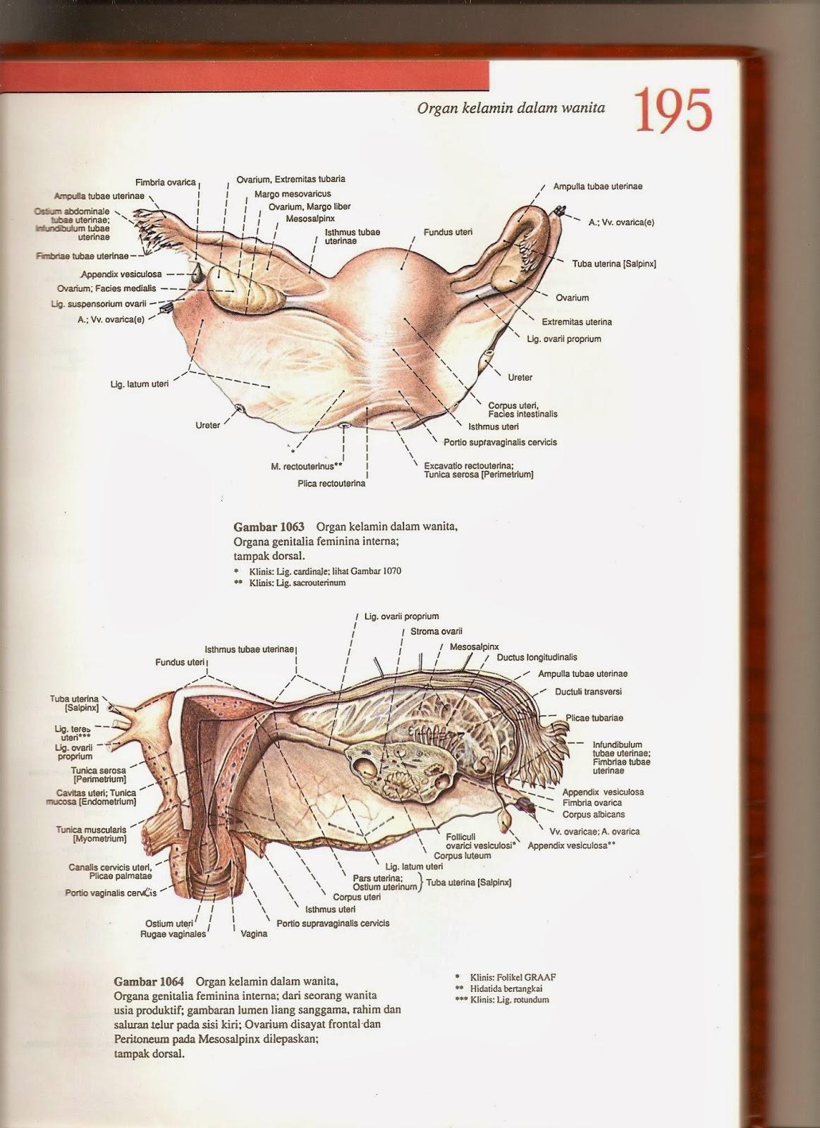 Asuhan Keperawatan Lengkap Organ Dalam Kelamin Wanita