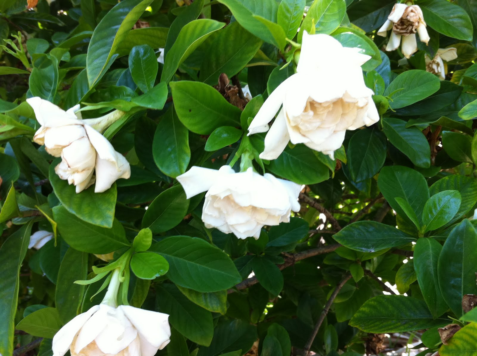 Seores de Gardenia Download Movie Pictures Photos Images