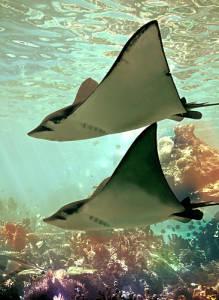 8 Hewan Laut Paling Mematikan di Dunia: Ikan Pari