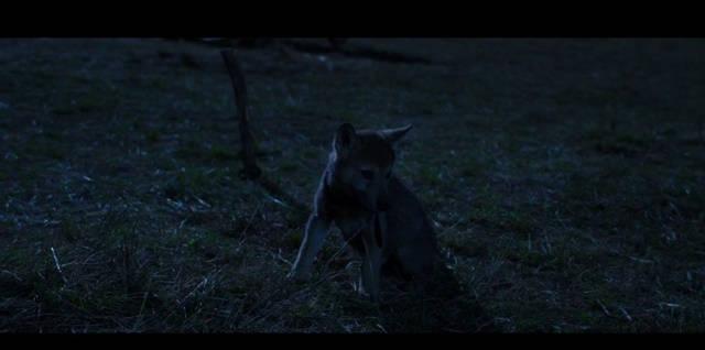 Wolf Totem (2015) HD 1080p Latino