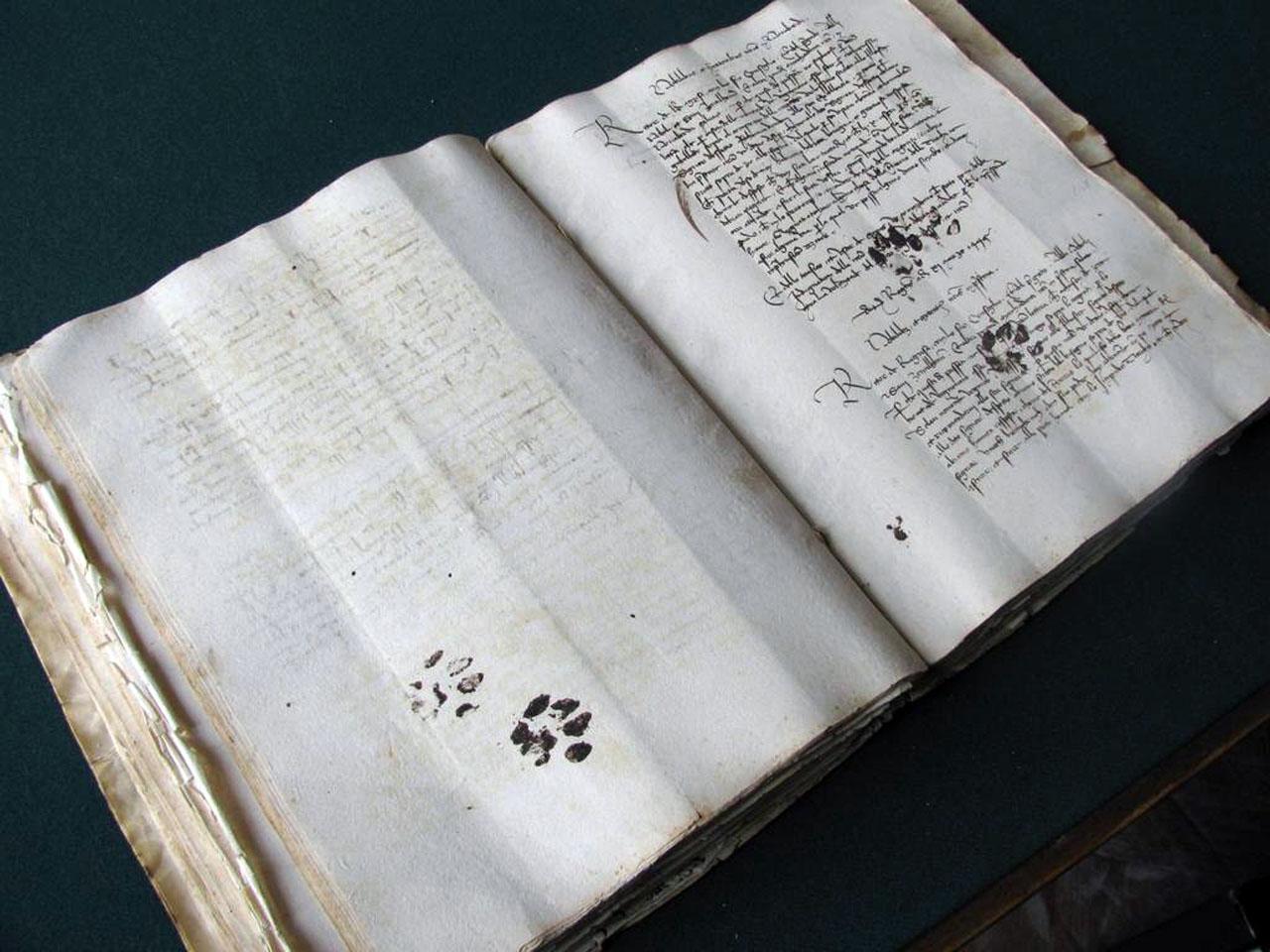 Что делал кот на книге по средневековой палеографии