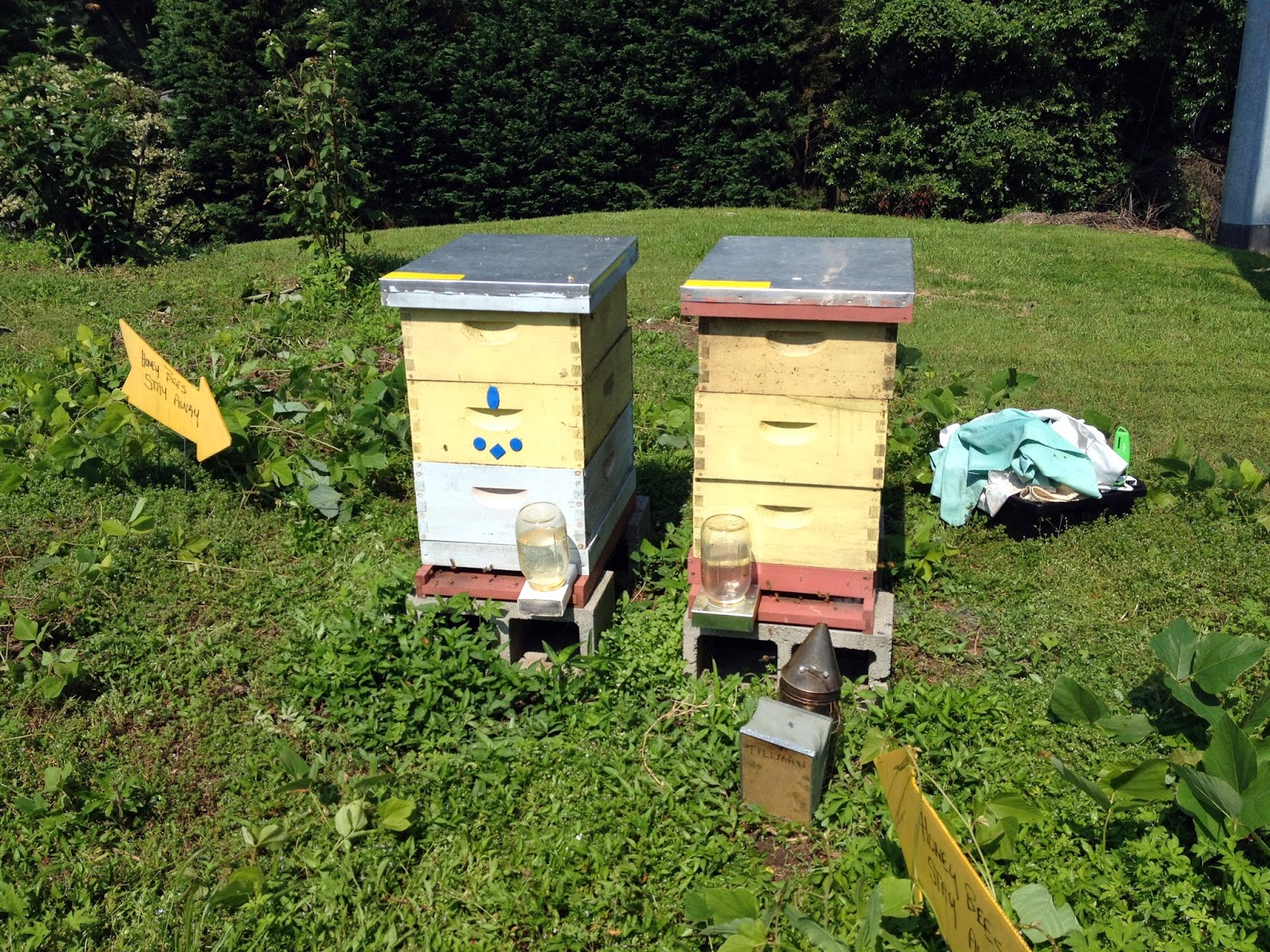 hive using thyme linda aprilbee s the way bees are floating leaves feeder in tea feeders rapid bee by