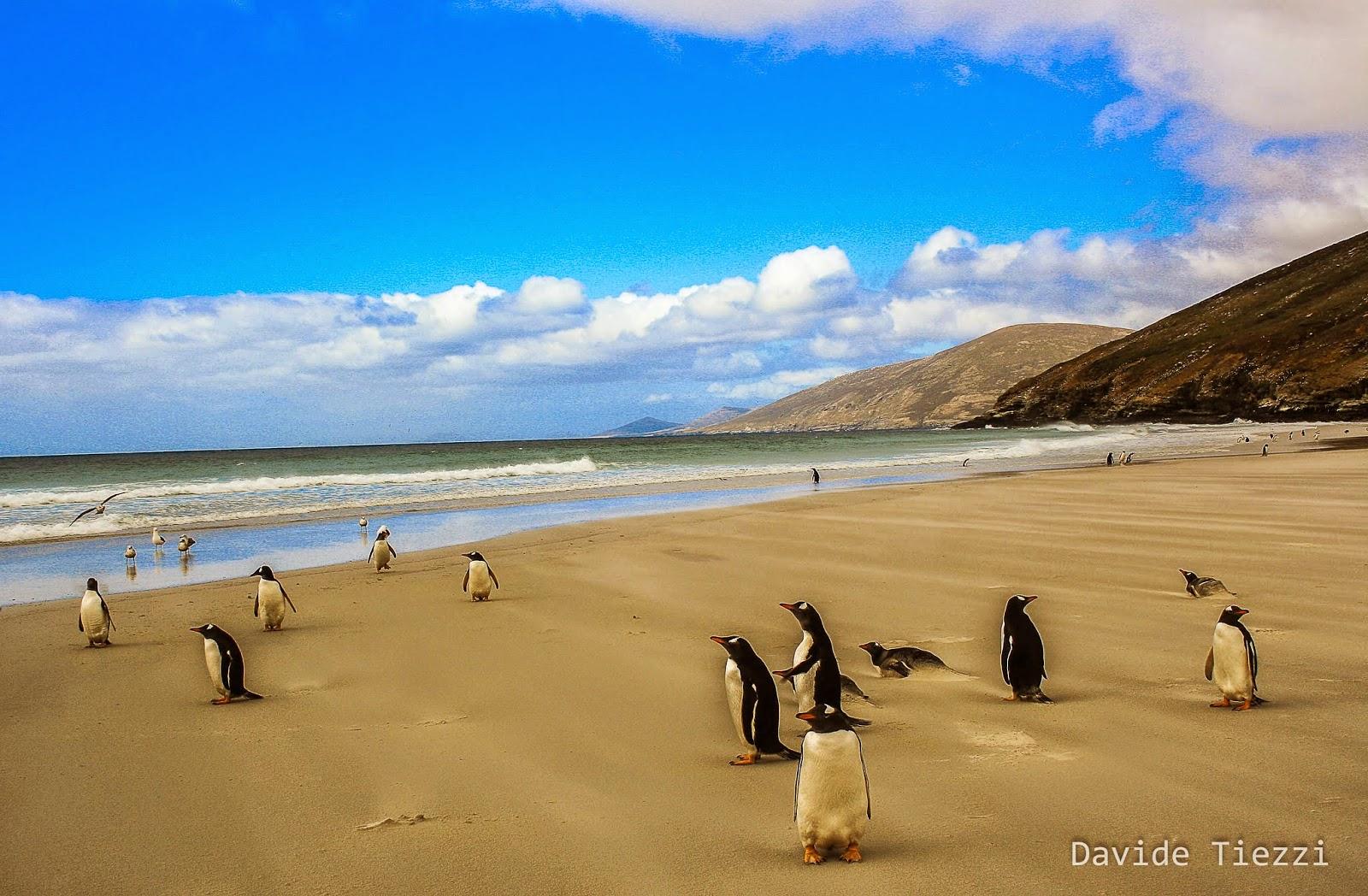 Visitare le Isole Malvinas o le Falkland