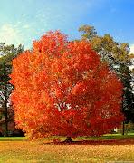 El otoño se ha hecho presente con todos sus contrastes en el último mes .