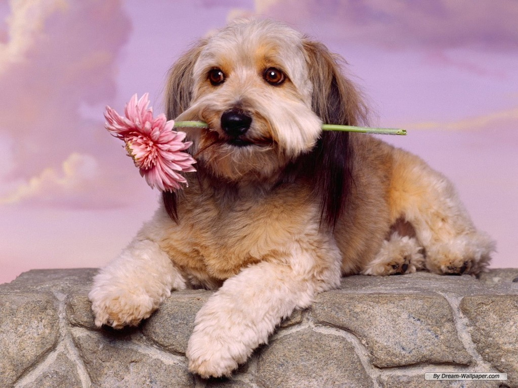 Cute Dog Breeds Pictures and Wallpaper